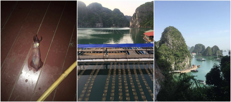 Halong Bay Collage