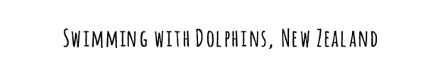 dolphins-black2