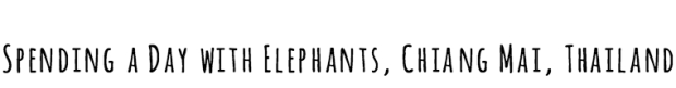 elephants-black